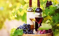 Vinoteka CAPO