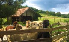 Druženje z živalmi – Mali raj