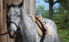 Palomino konjeniški klub